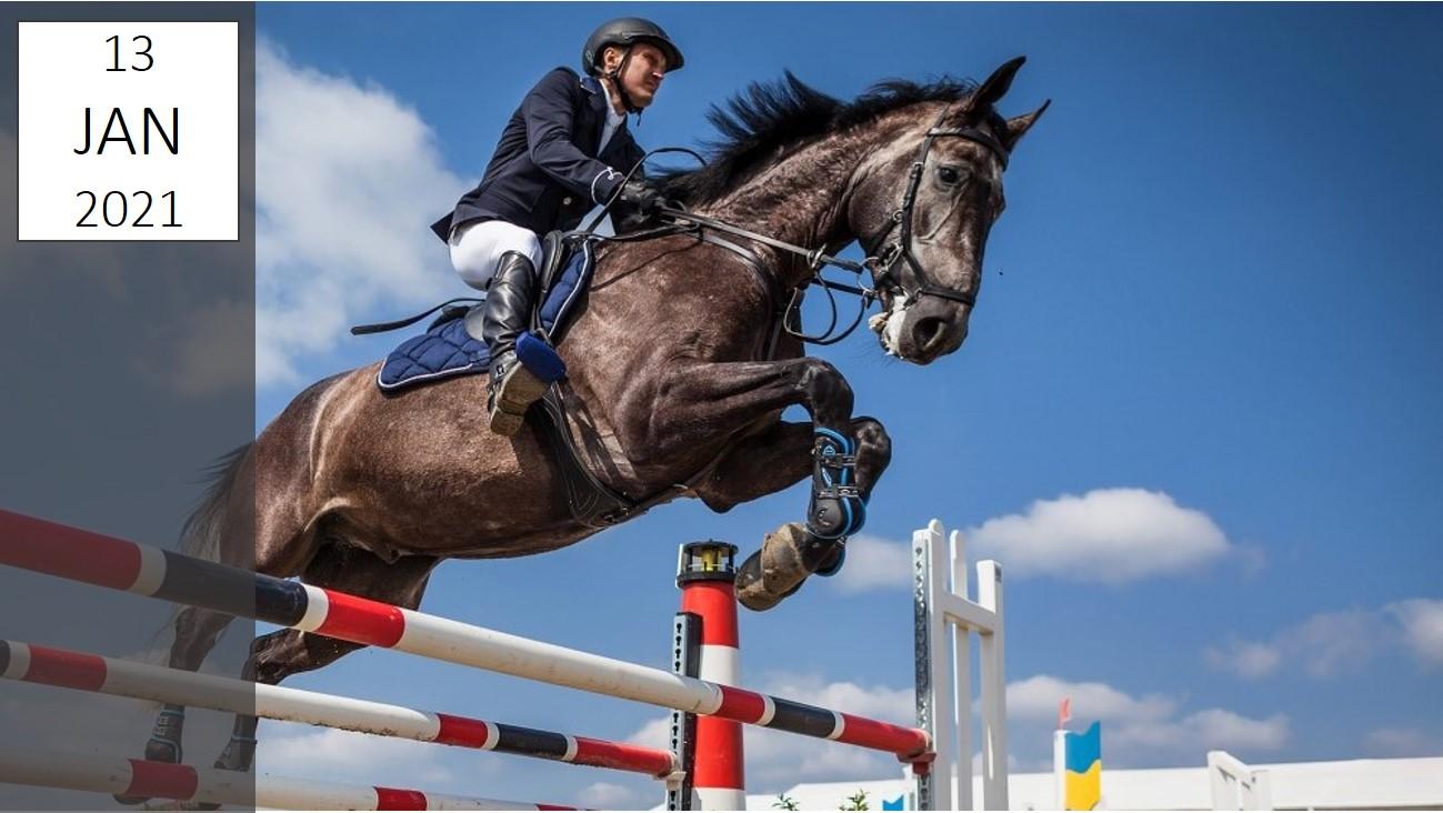 IBsolution | Oldenburger Pferdezuchtverband