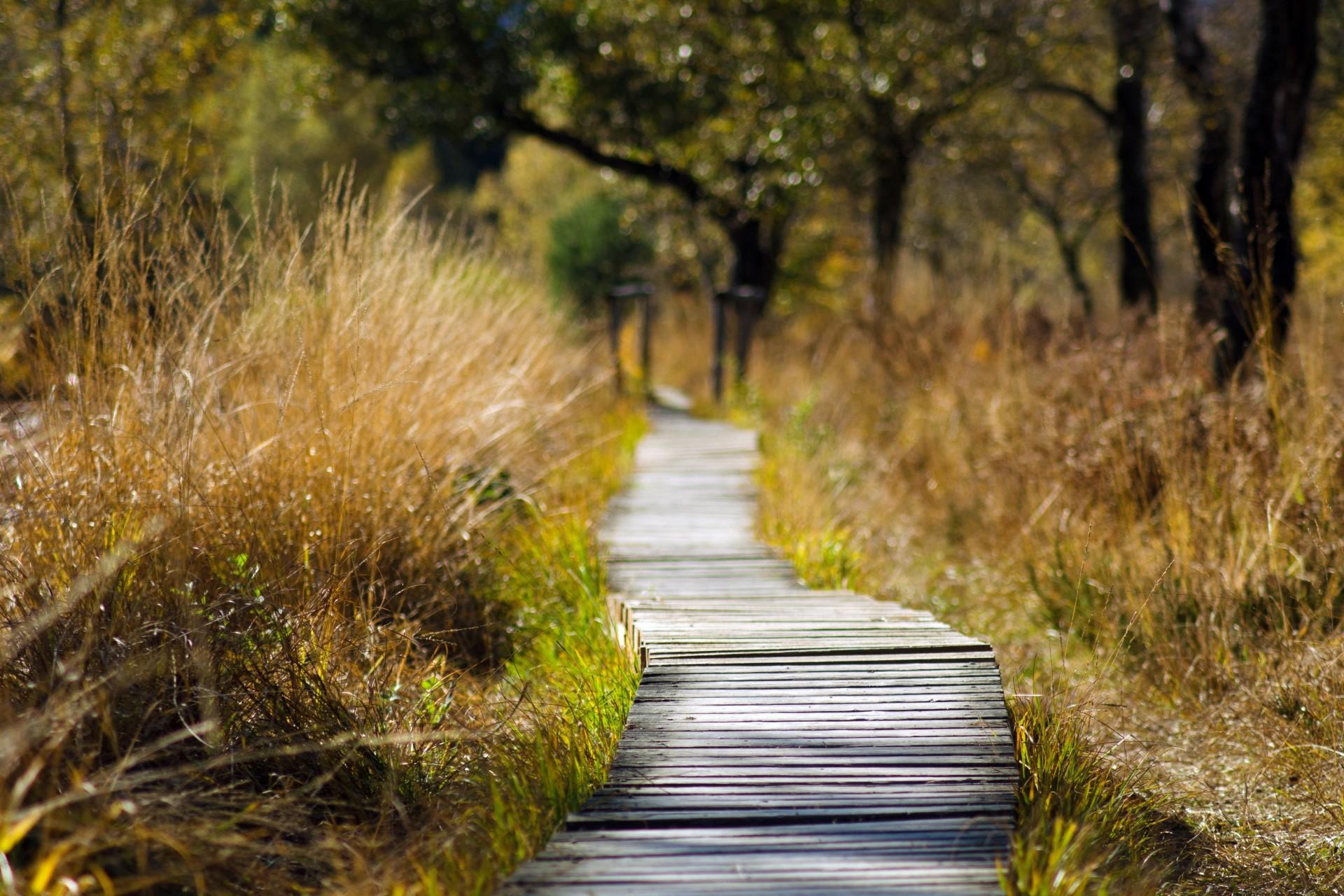 adventure-boardwalk-daylight-289327_1920x1280px